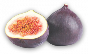 home_section0_figs