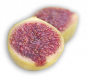 home_section0_figs_2